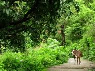 Rishikesh 039